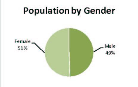 population by gender